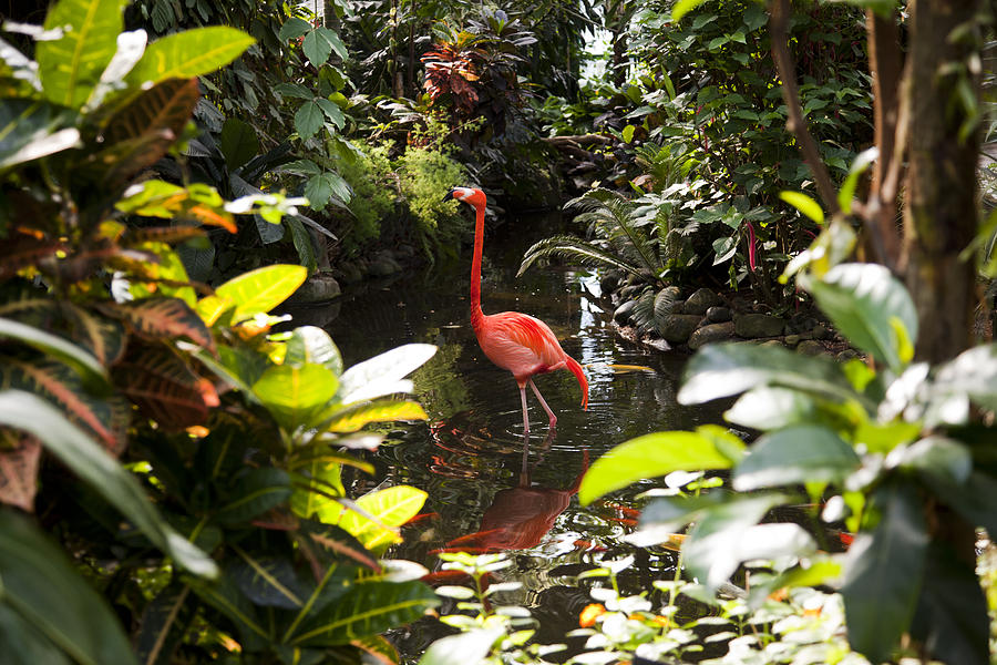 No People Photograph - A Flamingo Wades In Shallow Water by Taylor S. Kennedy