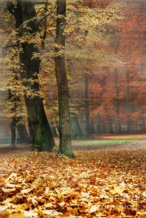 A Foggy Autumn Day Photograph