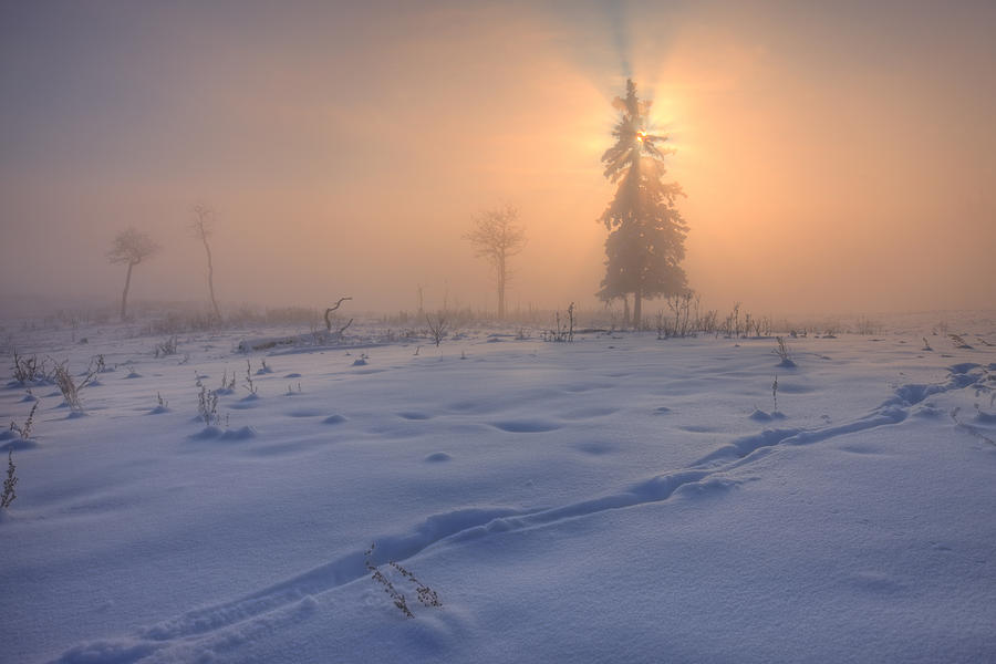 A Foggy Winter Sunrise With A Morning Photograph By Dan Jurak