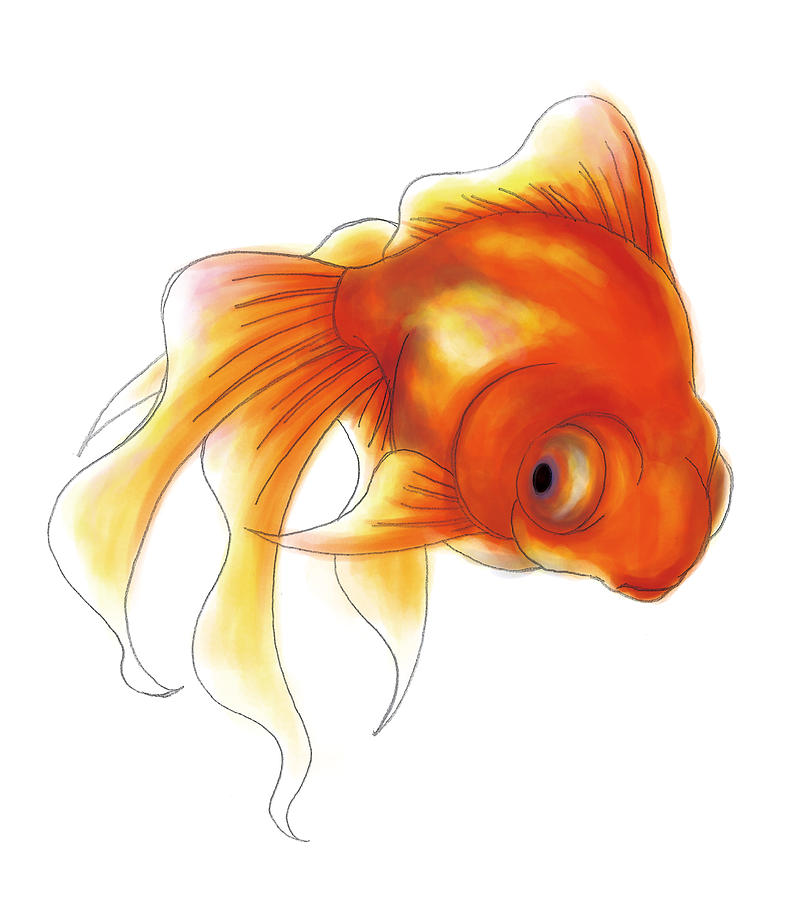 A Goldfish Digital Art  - A Goldfish Fine Art Print