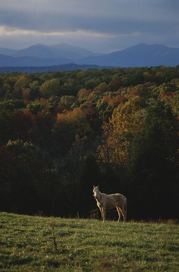 A Horse Stands On A Hill Overlooking Photograph