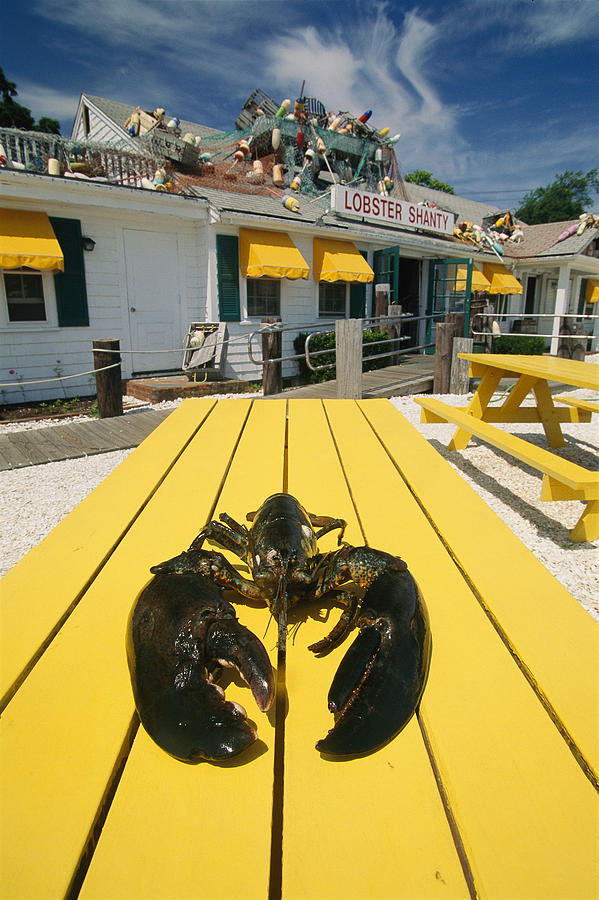 A Huge Lobster Is Slated For Dinner Photograph