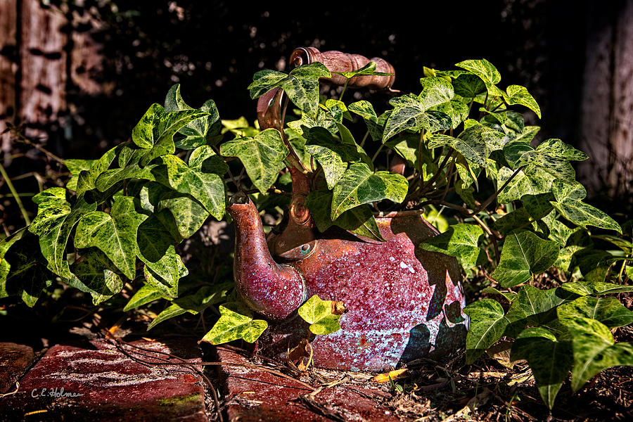 A Kettle Of Greens Photograph