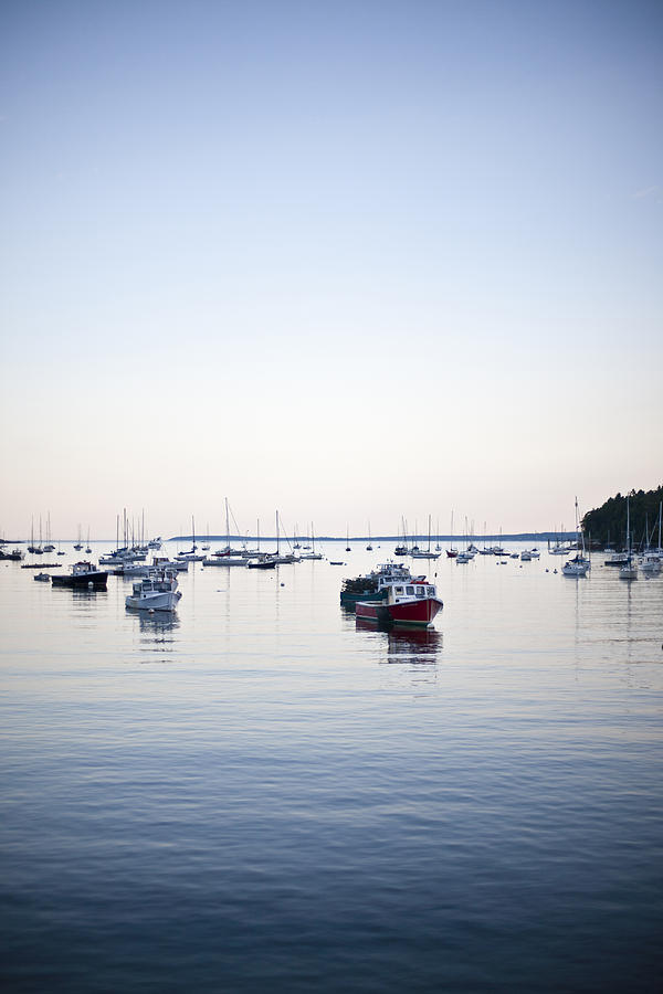 A Large Group Of Boats Float In A Maine Photograph  - A Large Group Of Boats Float In A Maine Fine Art Print