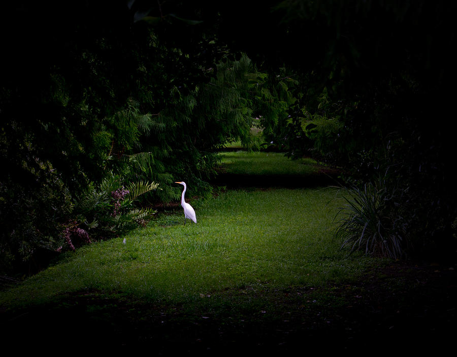 Egret Photograph - A Light In The Forest by Mark Andrew Thomas