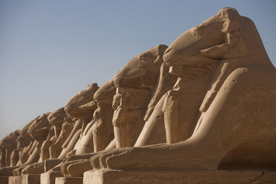A Line Of Sphinxes With Rams Heads Line Photograph  - A Line Of Sphinxes With Rams Heads Line Fine Art Print