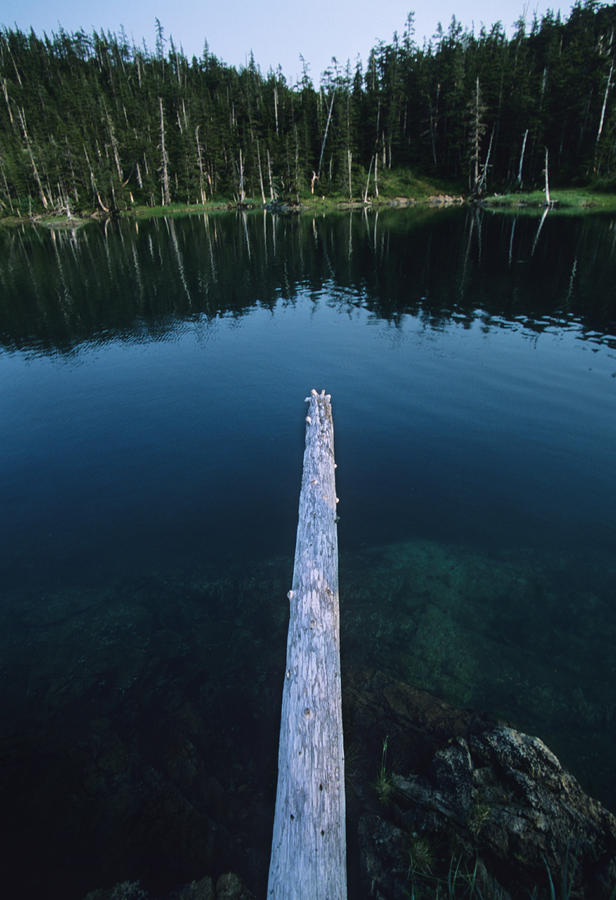 A Log Juts Out Over A Lake Photograph