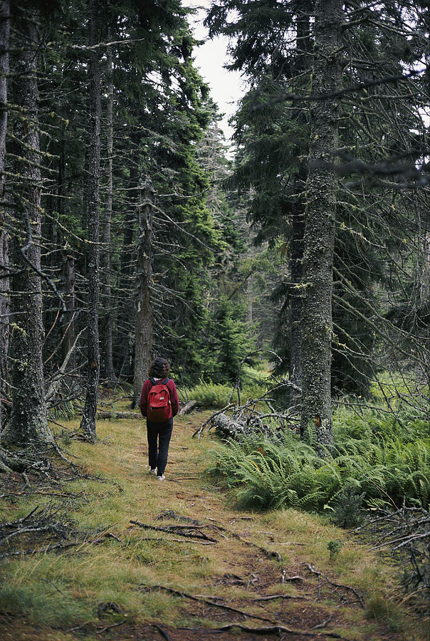 A Lone Hiker Enjoys A Wooded Trail Photograph