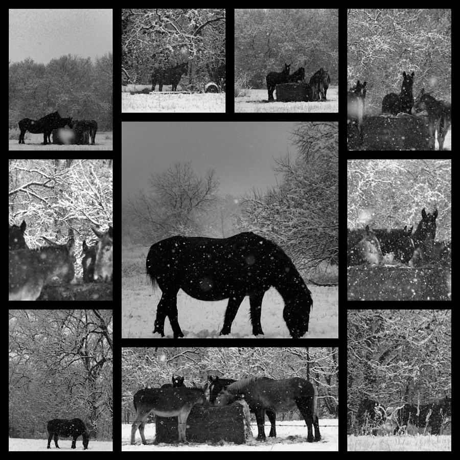 A Long Winter Photograph