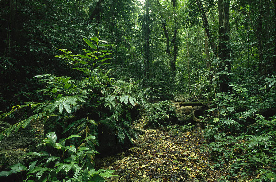 A Lush Woodland View In Papua New Photograph