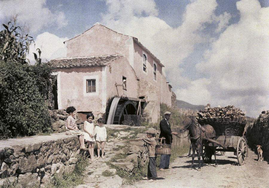 A Man Transports Wood In Terceira Photograph