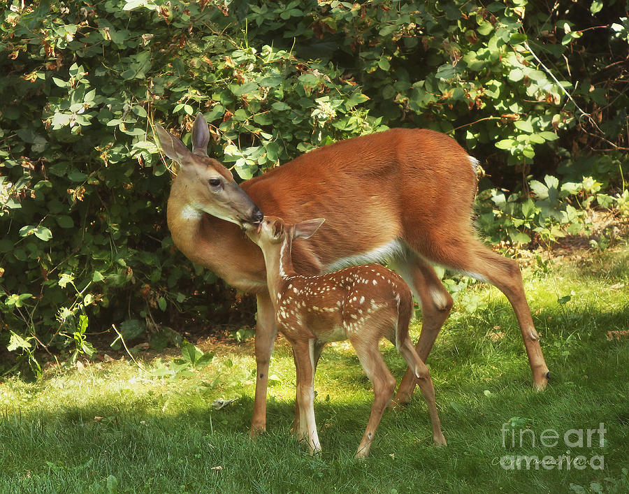 A Mothers Love Photograph  - A Mothers Love Fine Art Print