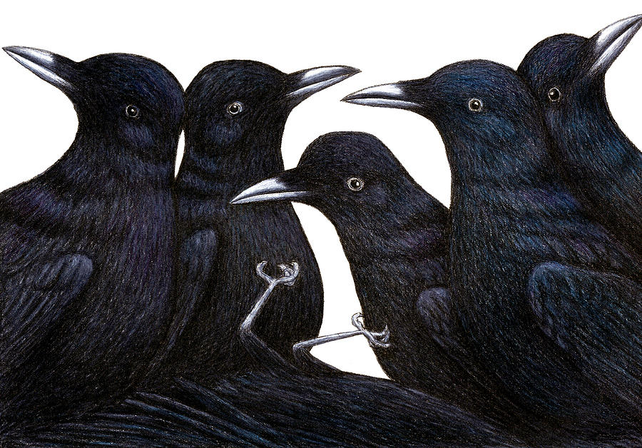 A Murder Of Crows Drawing