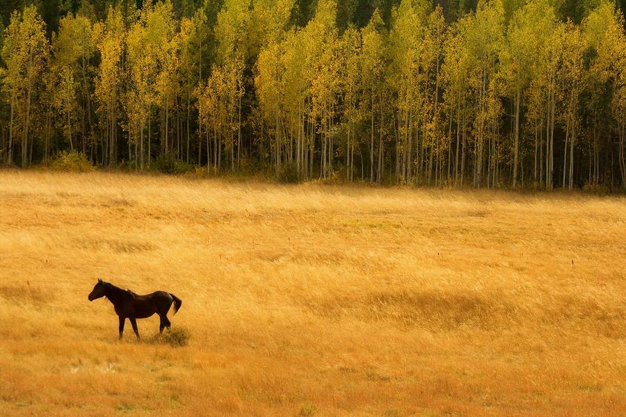 A Nice Autumn Day Photograph
