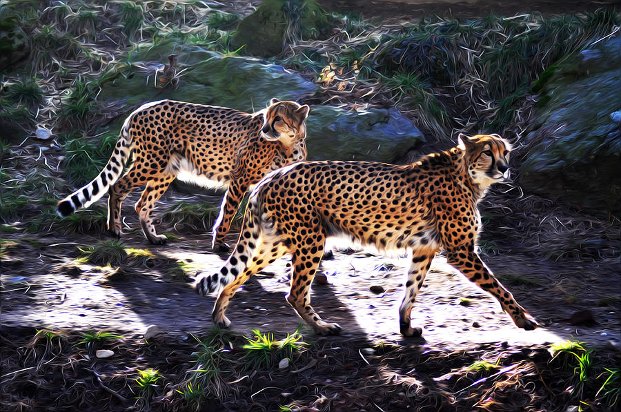 A Pair Of Cheetahs Photograph  - A Pair Of Cheetahs Fine Art Print