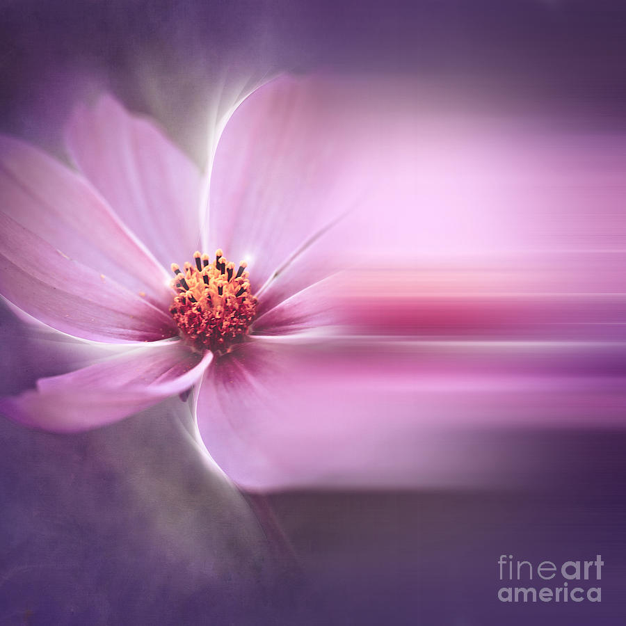 A Perfect Dream Photograph  - A Perfect Dream Fine Art Print