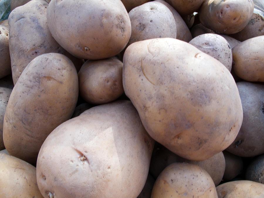 A Pile Of Large Lumpy Raw Potatoes Photograph
