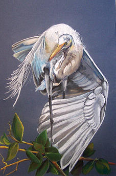 Bird Painting - A Preening Great Egret by Teresa Smith