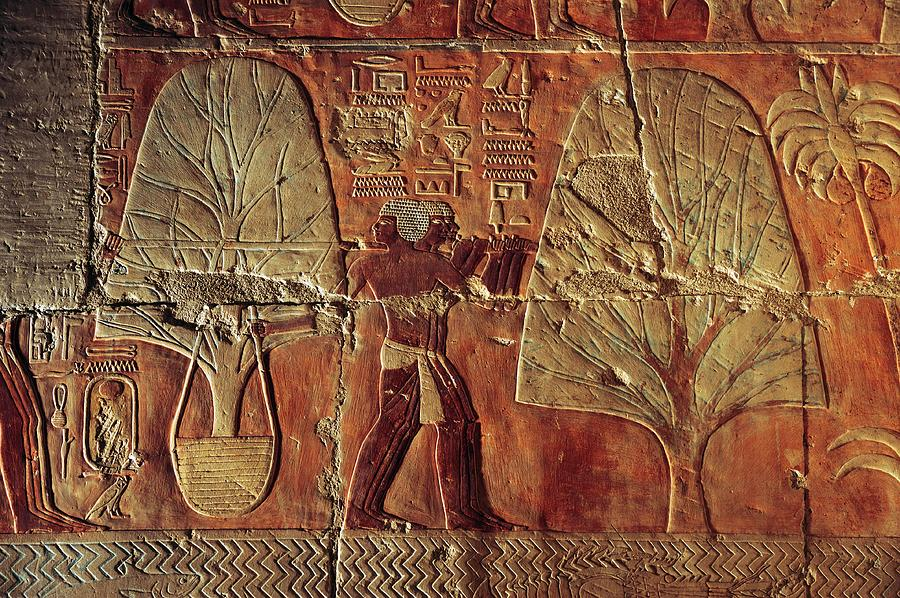 A Relief Of Men Carrying Myrrh Trees Photograph  - A Relief Of Men Carrying Myrrh Trees Fine Art Print
