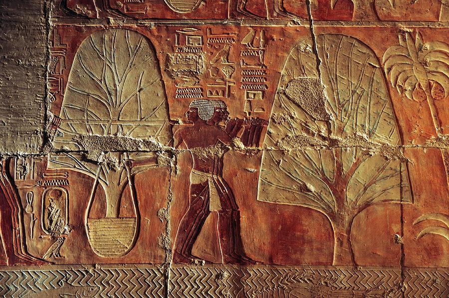 A Relief Of Men Carrying Myrrh Trees Photograph