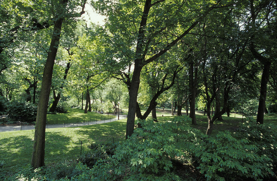 A Scenic And Shady Central Park Garden Photograph