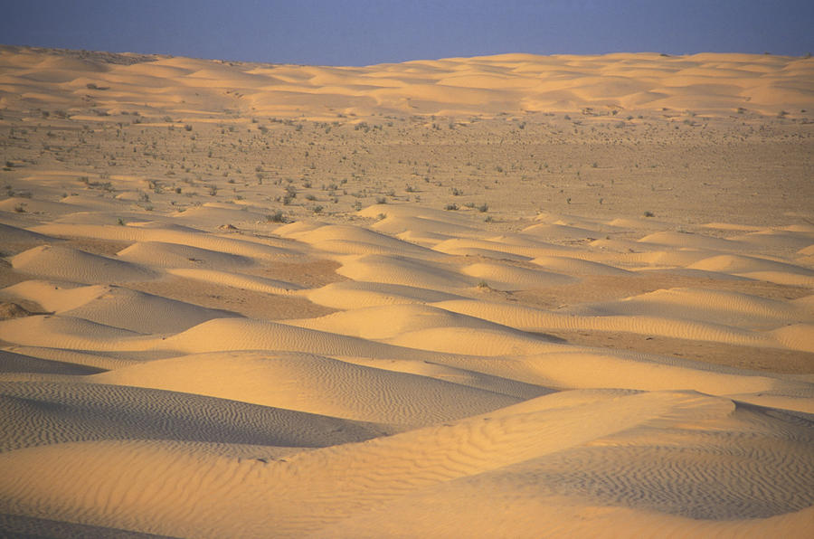 Outdoors Photograph - A Sea Of Dunes In The Sahara Desert by Stephen Sharnoff