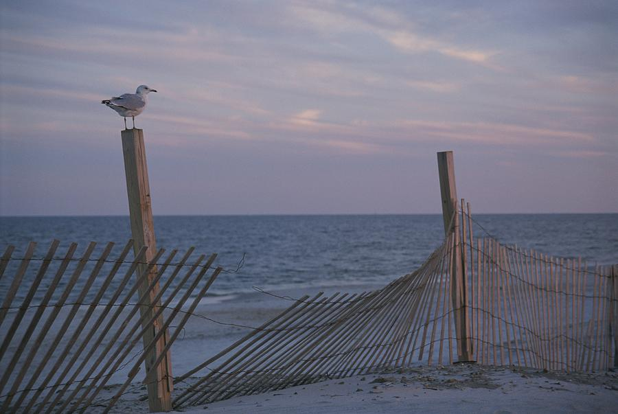 North America Photograph - A Seagull Pauses by Stacy Gold