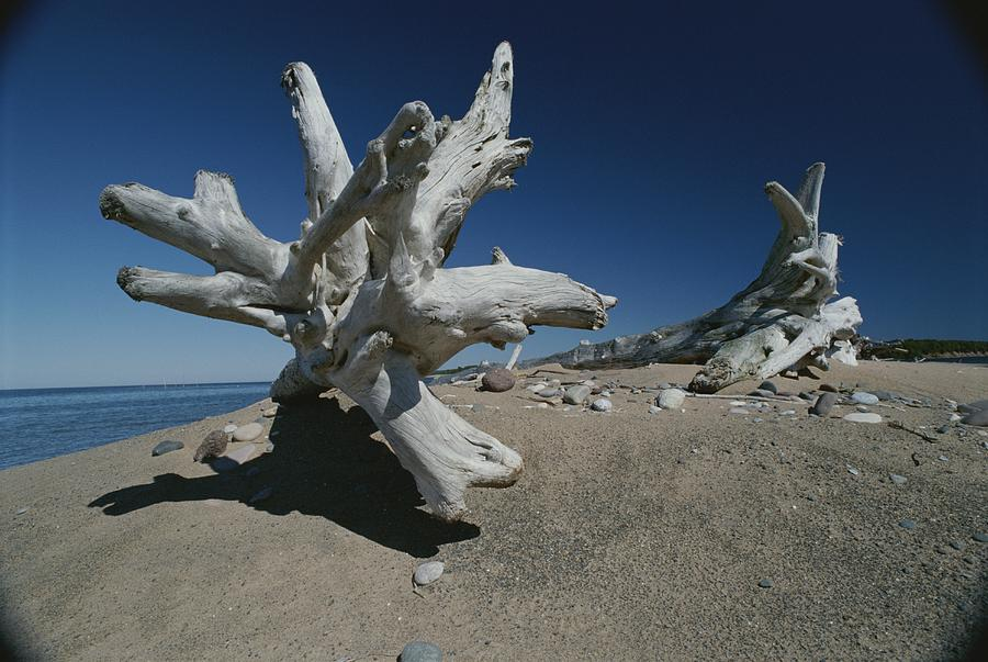 A Shot Of Some Driftwood On A Beach Photograph