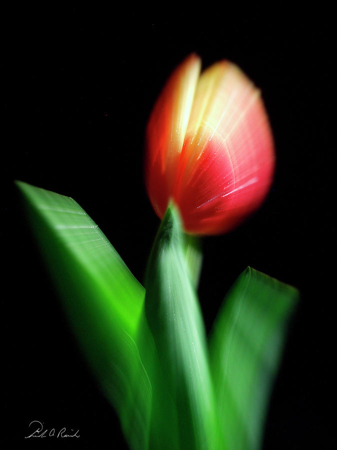 A Single Bloom Photograph