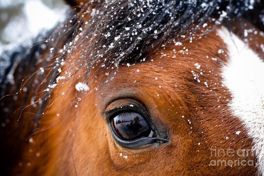 A Snowy Eye Photograph