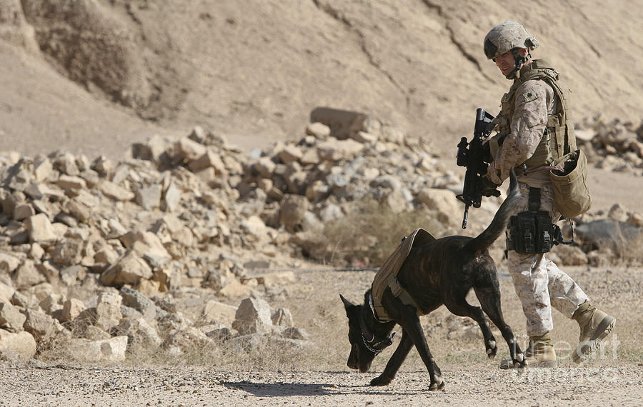 A Soldier And His Dog Search An Area Photograph