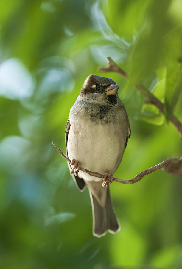A Sparrow Perched On A Small Branch Photograph