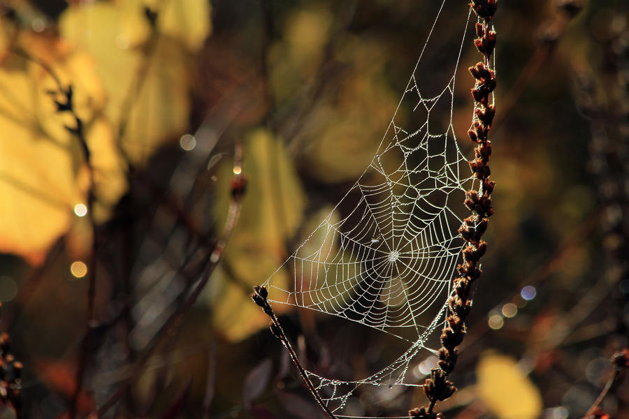 A Spiders Creation Photograph  - A Spiders Creation Fine Art Print