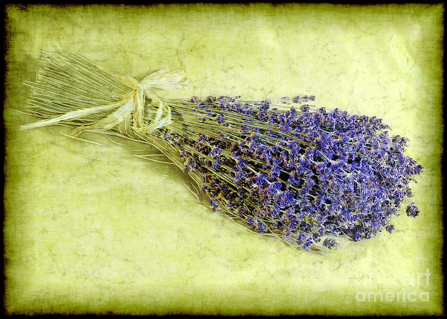 A Spray Of Lavender Photograph  - A Spray Of Lavender Fine Art Print