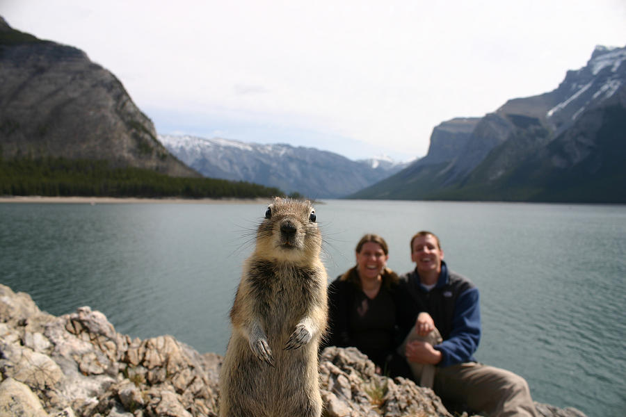 A Squirrel Takes The Shot By Tripping Photograph