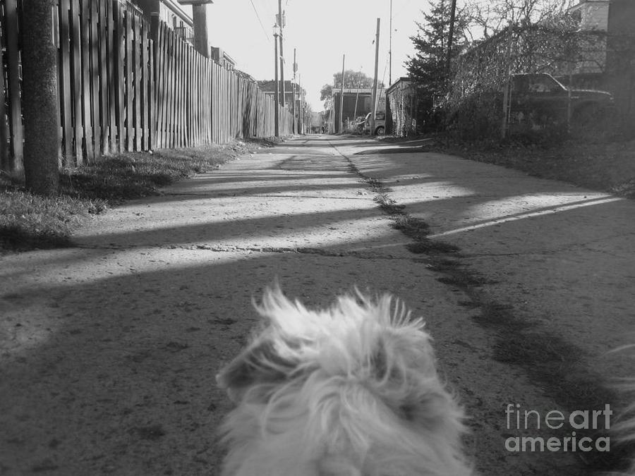 A Terriers Perspective Photograph