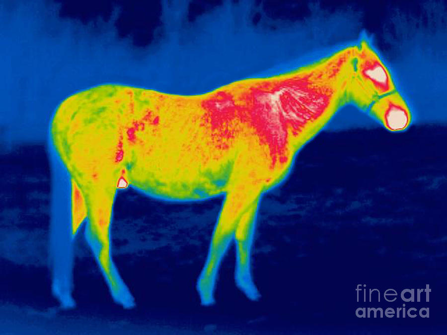 A Thermogram Of A Horse Photograph by Ted Kinsman