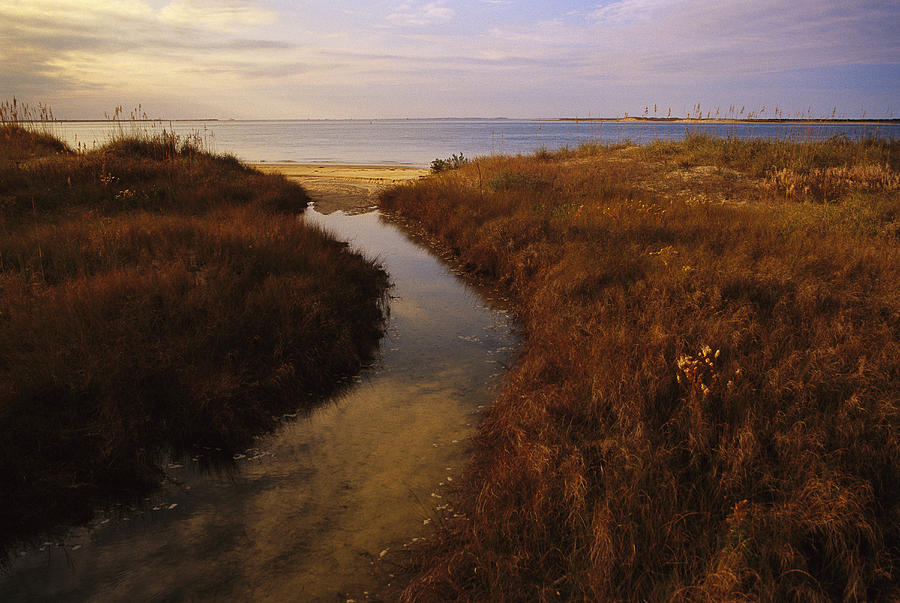A Tidal Creek Through Salt Marsh Photograph  - A Tidal Creek Through Salt Marsh Fine Art Print