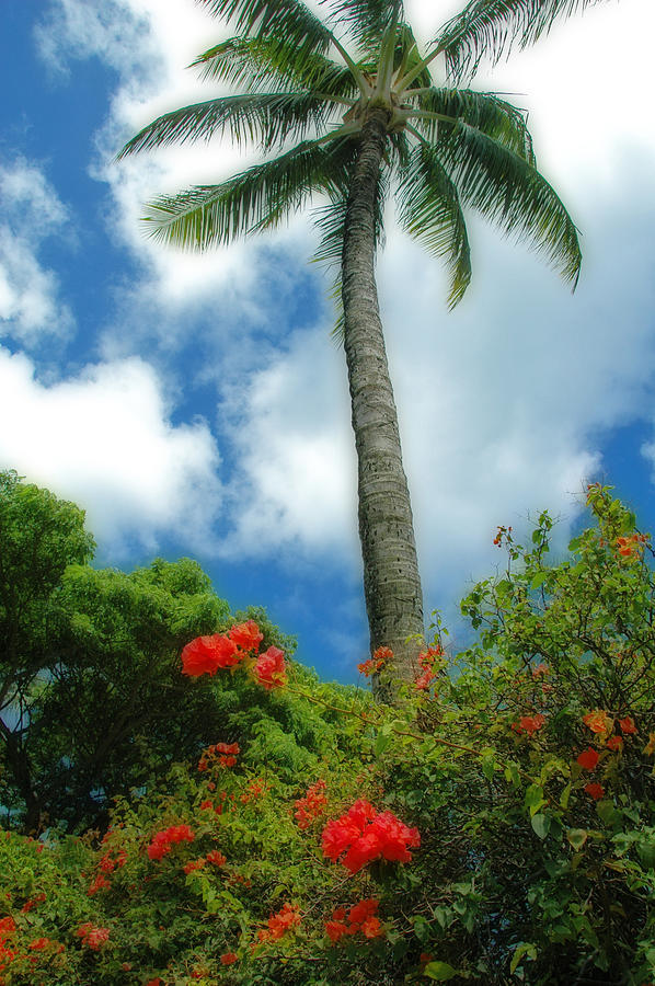 Palms Photograph - A Touch Of The Tropics by Lynn Bauer