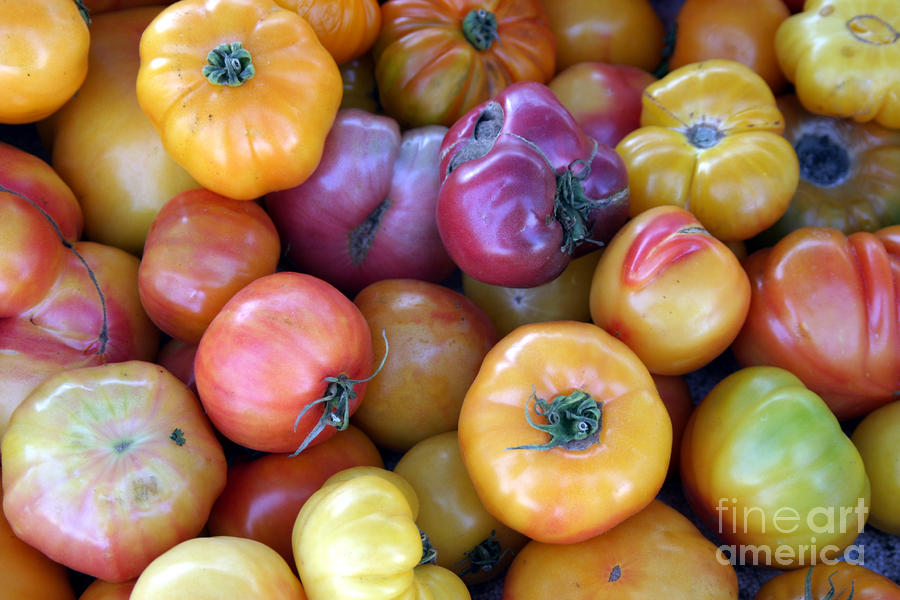 A Trip Through The Farmers Market Featuring Heirloom Tomatoes. Photograph