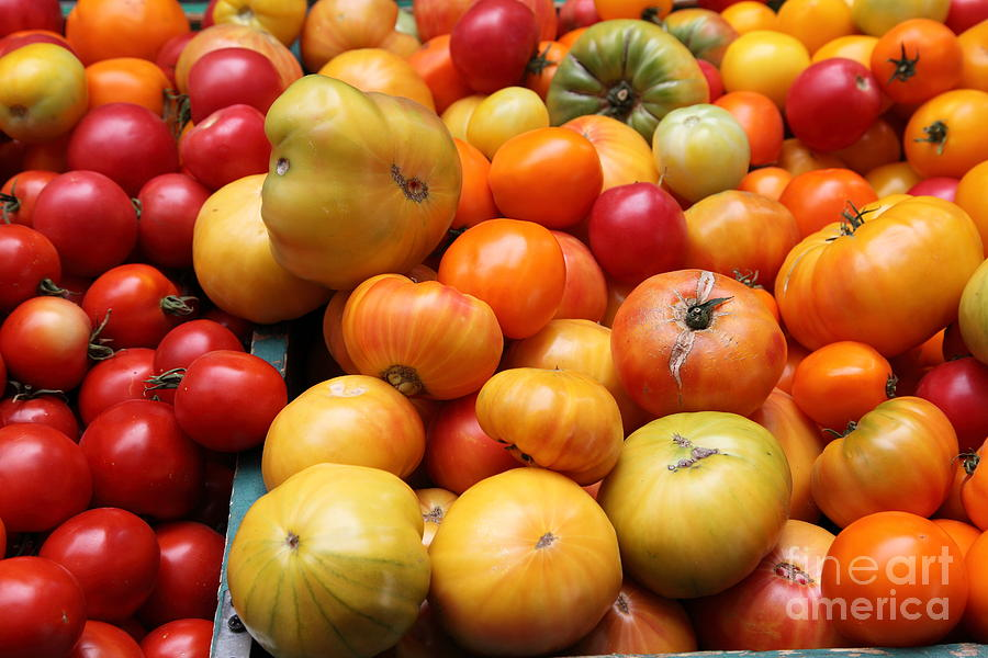 A Variety Of Fresh Tomatoes - 5d17811 Photograph  - A Variety Of Fresh Tomatoes - 5d17811 Fine Art Print
