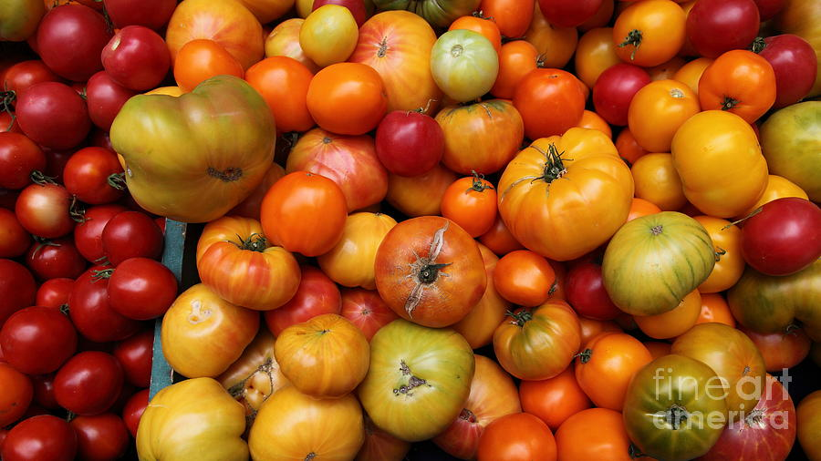 A Variety Of Fresh Tomatoes - 5d17812-long Photograph  - A Variety Of Fresh Tomatoes - 5d17812-long Fine Art Print