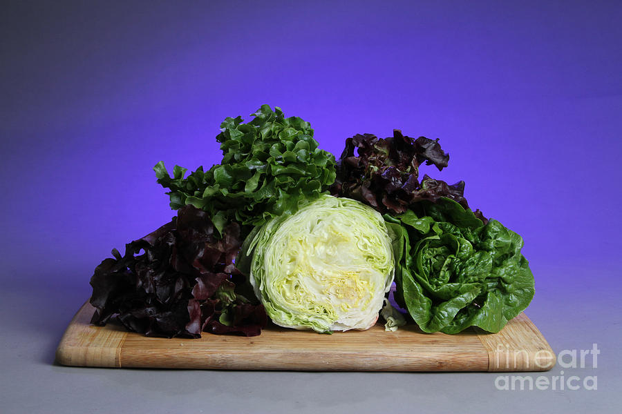 A Variety Of Lettuce Photograph