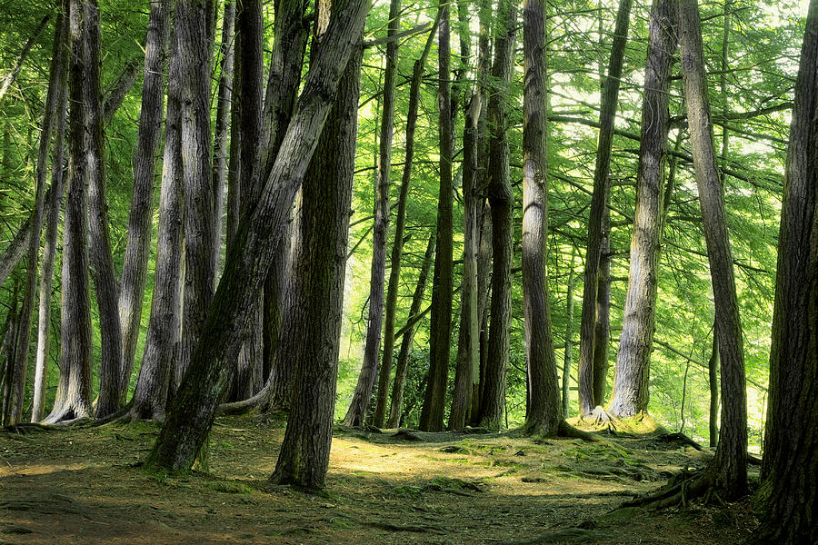 A Walk In The Forest Photograph
