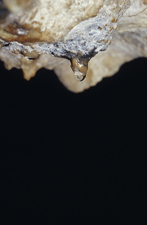 A Water Drop Seeps From A Stalagtite Photograph
