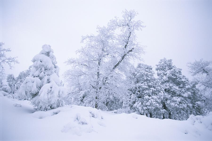 A Winter Landscape Of Snow-covered Photograph