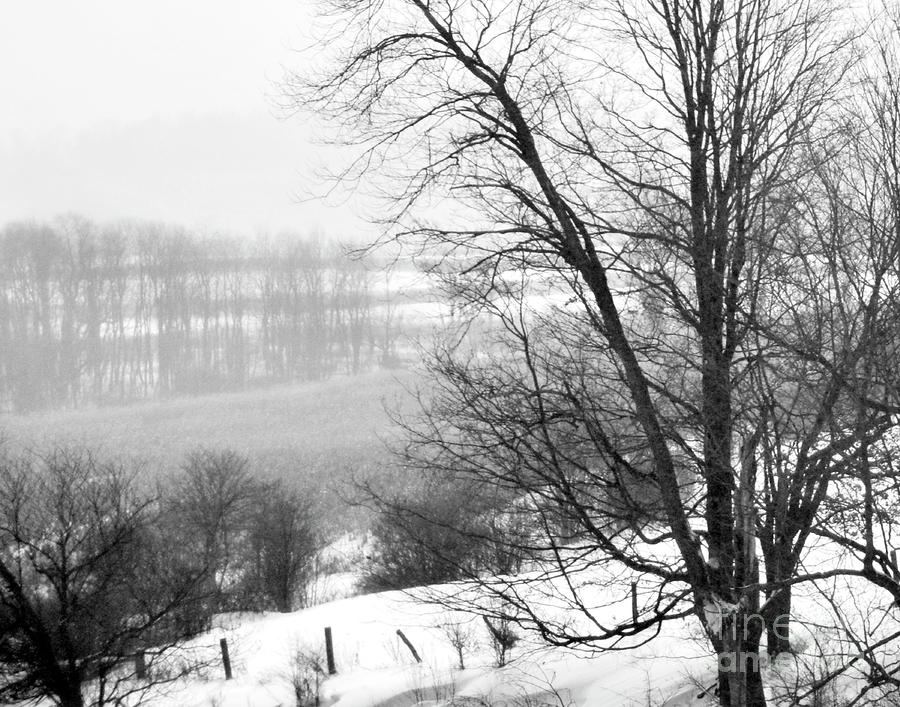 A Wintry Day Photograph  - A Wintry Day Fine Art Print