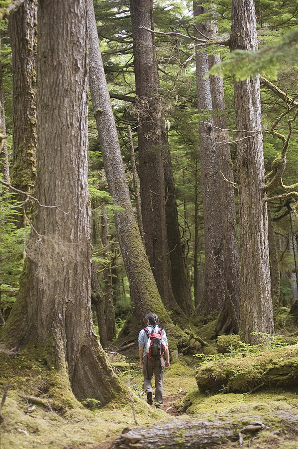 A Woman Walks In Old Growth Forest Photograph
