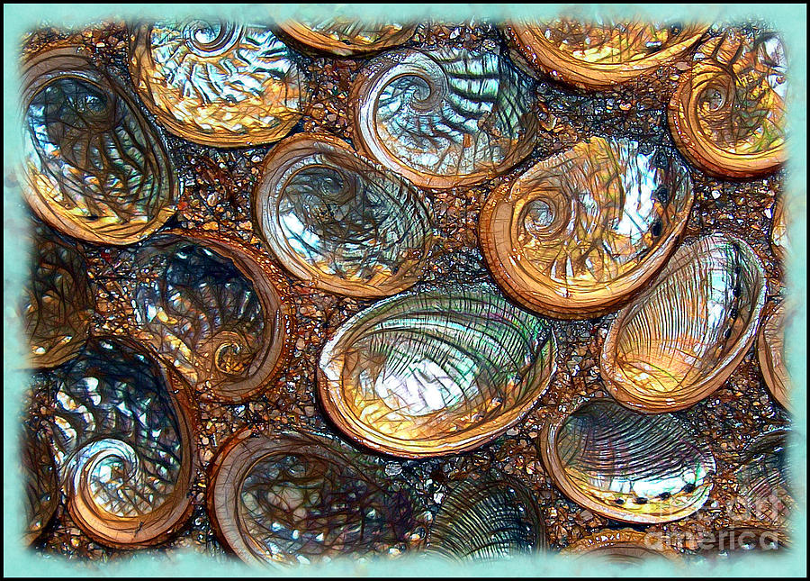 Abalones Photograph - Abalones by Judi Bagwell