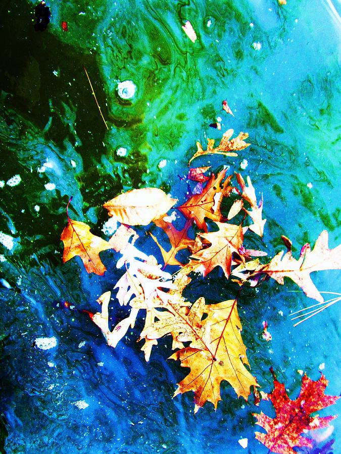 Abstract Leaves And Water Photograph - Abstract-11 by Todd Sherlock
